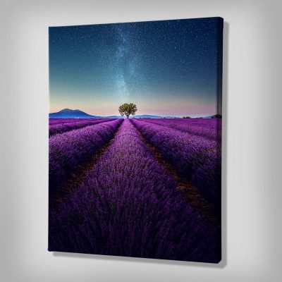 Ark Rebel Lavender by Night Wall Canvas Art
